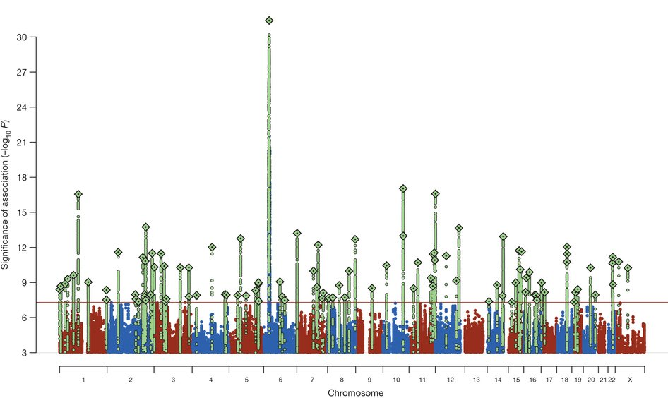 Manhattan plot showing schizophrenia associations.  Manhattan plot of the discovery genome-wide association meta-analysis of 49 case control samples (34,241 cases and 45,604 controls) and 3 family based association studies (1,235 parent affected-offspring trios). The x axis is chromosomal position and the y axis is the significance (–log10 P; 2-tailed) of association derived by logistic regression. The red line shows the genome-wide significance level (5 × 10−8). SNPs in green are in linkage disequilibrium with the index SNPs (diamonds) which represent independent genome-wide significant associations.  Biological insights from 108 schizophrenia-associated genetic loci.  O'Donovan et al 2014.