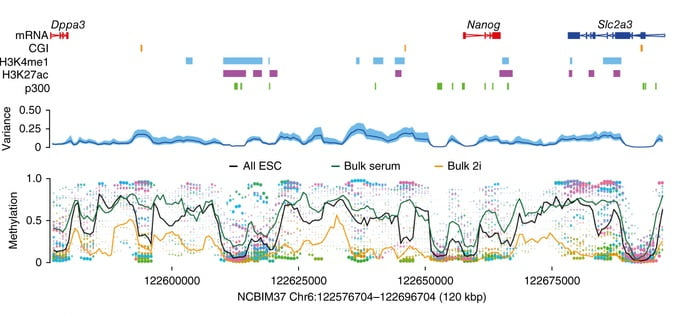 BS-seq reveals DNA methylation heterogeneity in ESCs.  Estimated DNA methylation rates using a sliding window in an example region containing the Nanog locus with some annotated features. Each single ESC is represented by a different color (bottom), and dot size is the inverse of estimation error. Mean methylation rate estimates across cells (black line, bottom) and cell-to-cell variance (blue line, middle; 95% confidence interval in light blue) are shown. Methylation rates for 'bulk serum' (green line) and 'bulk 2i' (orange line) are superimposed (bottom).  Kelsey et al 2014.