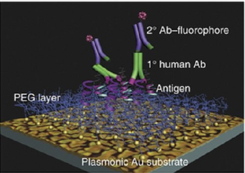 A plasmonic chip for biomarker discovery and diagnosis of type 1 diabetes.  Schematic depicting the spatial relationship of the platform's PEG layer, the islet-specific antigens, the primary autoantibodies (Abs) from diluted human serum or blood and the detection antibodies conjugated with a fluorophore signal.  Feldman et al 2014.