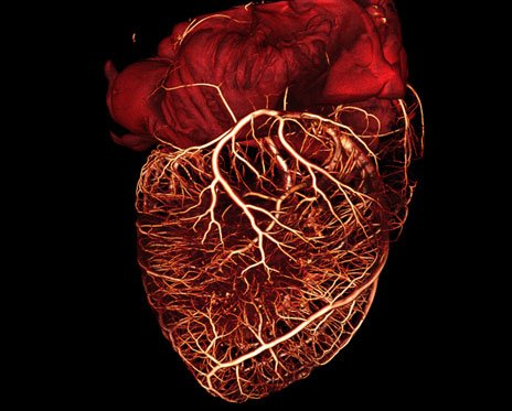 Transplanting gene into injured hearts creates biological pacemakers - healthinnovations