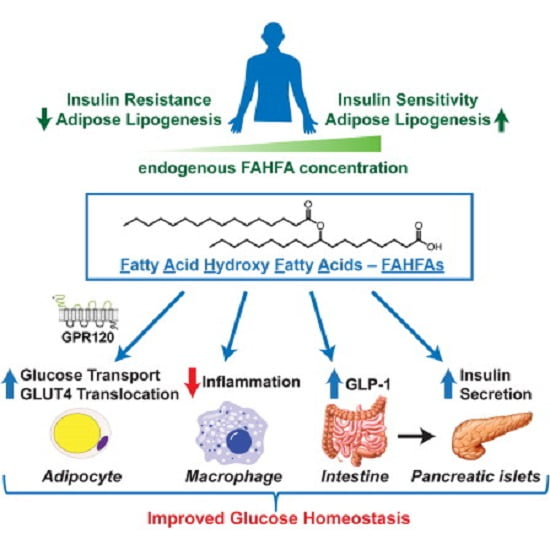 Increased adipose tissue lipogenesis is associated with enhanced insulin sensitivity. Mice overexpressing the Glut4 glucose transporter in adipocytes have elevated lipogenesis and increased glucose tolerance despite being obese with elevated circulating fatty acids. Lipidomic analysis of adipose tissue revealed the existence of branched fatty acid esters of hydroxy fatty acids (FAHFAs) that were elevated 16- to 18-fold in these mice. FAHFA isomers differ by the branched ester position on the hydroxy fatty acid (e.g., palmitic-acid-9-hydroxy-stearic-acid, 9-PAHSA). PAHSAs are synthesized in vivo and regulated by fasting and high-fat feeding. PAHSA levels correlate highly with insulin sensitivity and are reduced in adipose tissue and serum of insulin-resistant humans. PAHSA administration in mice lowers ambient glycemia and improves glucose tolerance while stimulating GLP-1 and insulin secretion. PAHSAs also reduce adipose tissue inflammation. In adipocytes, PAHSAs signal through GPR120 to enhance insulin-stimulated glucose uptake. Thus, FAHFAs are endogenous lipids with the potential to treat type 2 diabetes.  Discovery of a Class of Endogenous Mammalian Lipids with Anti-Diabetic and Anti-inflammatory Effects.  Kahn et al 2014.