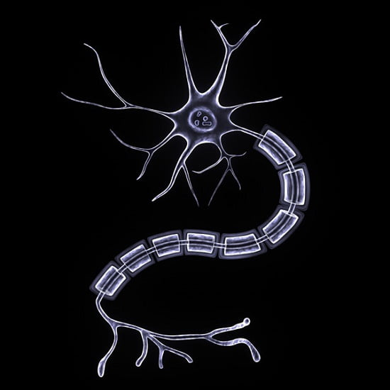 Highly Detailed and Accurate Model of a Nerve Cell (Neuron).  Credit:  TurboSquid 2014.