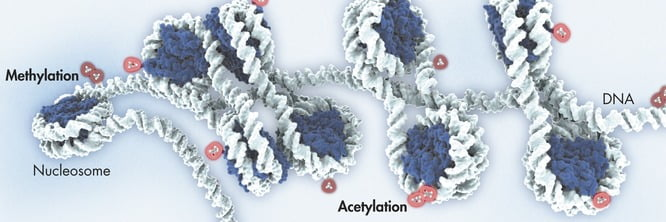 Epigenetic methylation is a well-balanced process in healthy cells. But in some diseases, in particular cancers, aberrant CpG methylation changes may occur, and both genomewide hypomethylation and gene-specific hypermethylation in promoters of tumor suppressor genes can be observed. Many studies have shown that tumor emergence and growth are associated with changes in DNA methylation patterns, such as the case of prostate cancer development. Therefore, one of the most important application areas for epigenetic research is in the diagnosis and treatment of cancer — using DNA methylation patterns to detect cancer at very early stages, to classify tumors, and to predict and monitor response to drug treatments.  © QIAGEN 2013–14. All rights reserved.