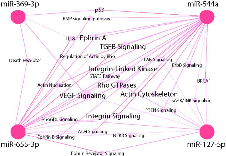 This is a network analysis of 28 pathways related to adhesion/invasion/motility and intracellular signaling altered by two or more miRNAs.  Credit:  Ralph Weichselbaum.