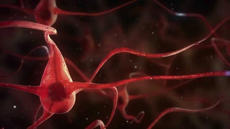 Credit:  Internationale Stichting Alzheimer Onderzoek (ISAO) (NL), Alzheimer Forschung Initiative e.V. (AFI) (D) and La Ligue Européenne Contre la Maladie d'Alzheimer (LECMA) (FR).