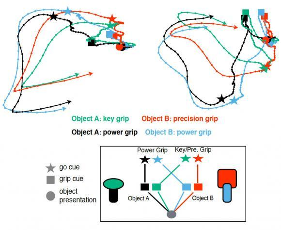 A trajectory visualization shows how neural patterns associated with planning grips of different objects converged and diverged as the experimental task proceeded.  Credit:  Donoghue Lab/Brown University.