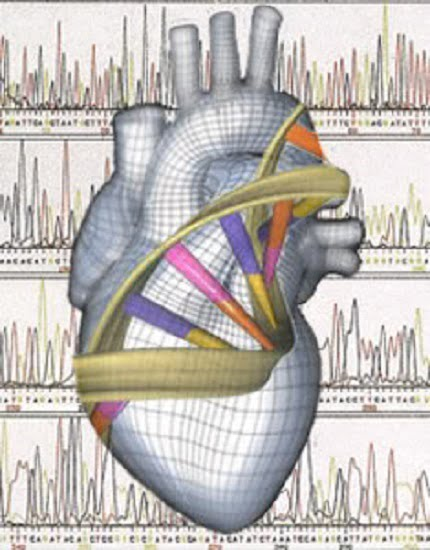 Gene associated with sudden cardiac death identified by ICD monitoring -healthinnovations