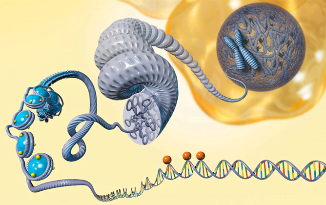 Epigenetic regulation of metastatic breast cancer progression may guide prognosis and future therapy - healthinnovations