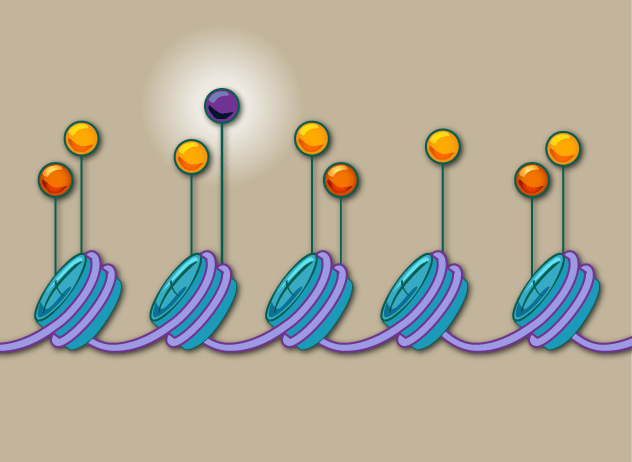 Epigenomic marks on chromatin can signify functional roles of genetic elements like enhancers. Image courtesy of Lauren Solomon, Broad Communications.