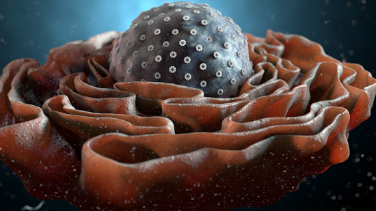 a study from researchers at St. Jude Children's Research Hospital has determined that the protein nucleophosmin (NPM1) serves as glue that holds proteins and RNA together in the nucleolus, showing how NPM1's structure makes it ideal for the job. The team states that their findings come amid intense scientific interest in the role liquid-liquid phase separation plays in promoting membrane-less organelle assembly as well as in performing the molecular processes that occur within them.