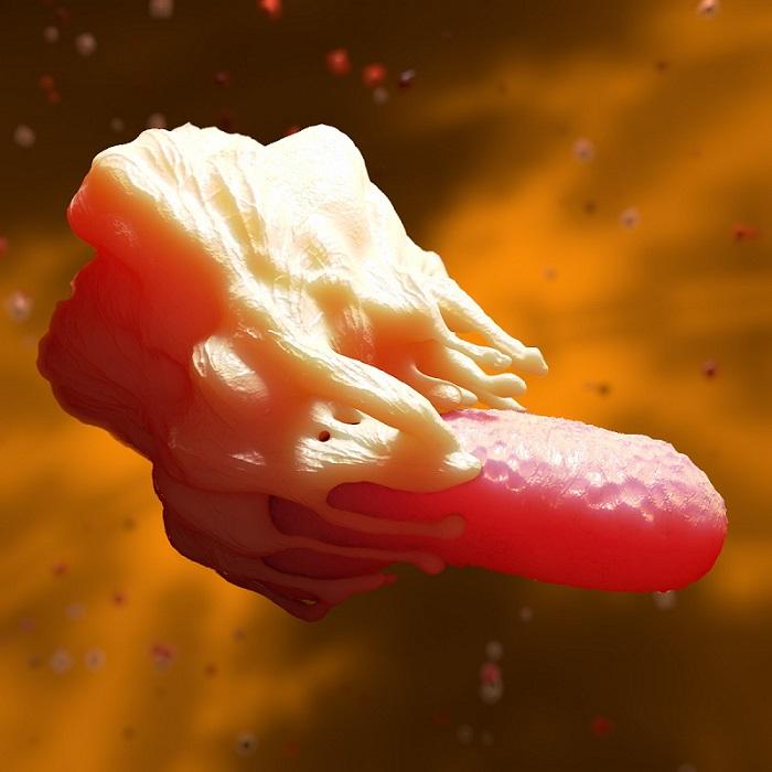 Macrophage and bacterium.  Credit: Turbosquid.