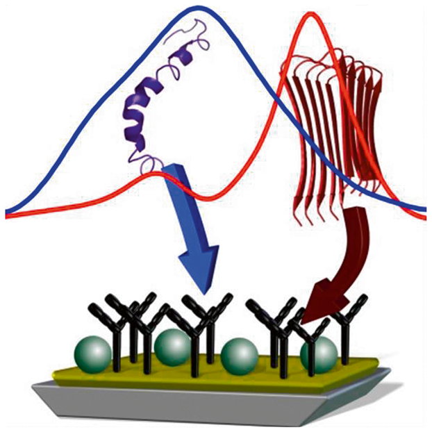 An immunologic ATR-FTIR sensor for Abeta peptide secondary structure analysis in complex fluids is presented. The secondary structure change of the Abeta peptide to beta-sheet was proposed as an early event in Alzheimer's disease. The transition may be used for diagnostics of this disease in an early state. We present an Attenuated Total Reflection (ATR) sensor modified with a specific antibody to extract minute amounts of Abeta peptide out of a complex fluid. Thereby, the Abeta peptide secondary structure was determined in its physiological aqueous environment by FTIR-difference-spectroscopy. The presented results open the door for label-free Alzheimer diagnostics in cerebrospinal fluid or blood. It can be extended to further neurodegenerative diseases. An infrared sensor analysing label-free the secondary structure of the Abeta peptide in presence of complex fluids. Gerwert et al 2016.