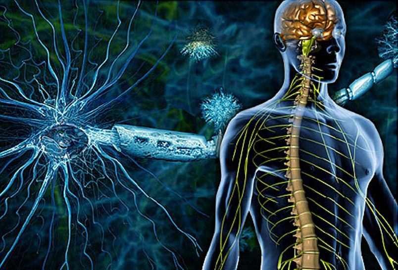 Scientists find genetic cause of multiple sclerosis - neuroinnovations