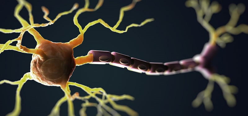 scientists-identify-spark-plug-that-ignites-nerve-cell-demise-in-als-neuroinnovations