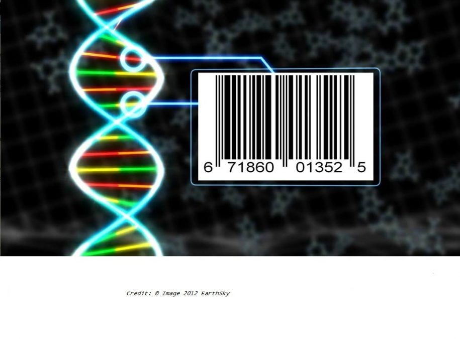 a study from researchers at Harvard Medical School develops and tests a synthetic microbial system capable of determining the origin of objects, with a view to identifying sources of foodborne illnesses. The team states their DNA-barcoded spores are incapable of growing in the wild, are derived from safe microbe strains, and can be sprayed onto goods such as crops or manufactured products to be detected months to years later.